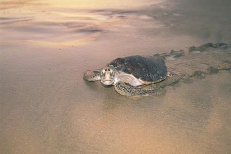 Nacimiento de Tortugas