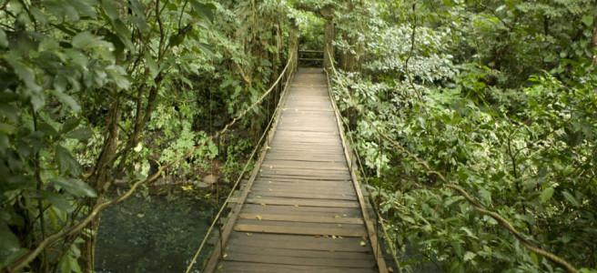 photoEscudo_Ecoturismo_en_la_Costa_Esmeralda__ecoturismoenlacostaheader