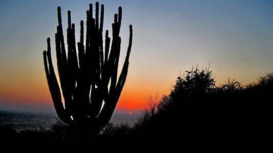 Cactus-Mazunte-MX1